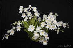 Orchid: Miltoniopsis Lady Snow 'Hanashobu' - by rocketrick1949
