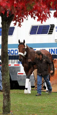 American Pharoah (Breeders' Cup Classic) arriving at Keeneland on October 27, 2015. Photo By: Chad B. Harmon