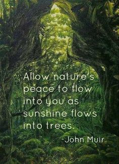 Allow nature's peace to flow into you as sunshine flows into trees.  John Muir