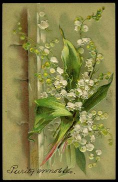 C KLEIN Early Signed Embossed Postcard - Lily of the Valley