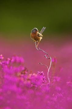 bird in pink flowers by Ben Hall