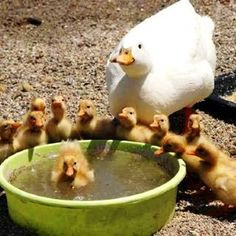 Teaching the little ones to swim♫♫