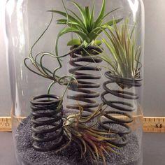 www.mimoss.com, airplant Plant Design, Air Plants, Glass Vase, Home Decor, Decoration Home, Room Decor, Home Interior Design, Home Decoration, Interior Design