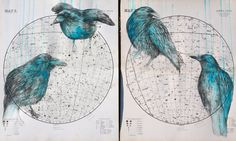 Louise McNaught:  Bird on Celestial Maps Series of Artworks
