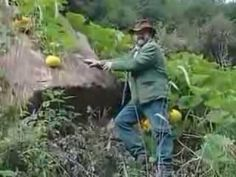 Permaculture The Agro Rebel   Sepp Holzer