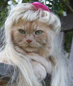 """""""Rapunzel, Rapunzel, let down your long hair."""""""