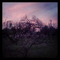 Naturaleza rosa