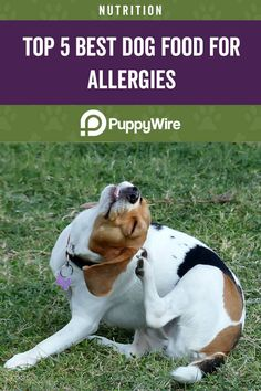 Does your dog show signs of allergies? Check out these top 5 best dog foods for allergies. Best Hypoallergenic Dogs, Best Dog Food, Dog Show, Food Allergies, Dog Food Recipes, Your Dog, Nutrition, Foods, Signs