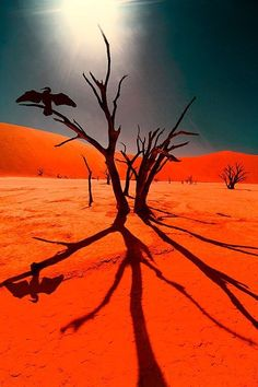 The desert breathes, the desert cries, the desert moves before my eyes. It's a lick of sand, a river of gold, a keeper of those stories untold. Deadvlei, Namib-Naukluft National Park, Namibia. www.afriuniquetours.com