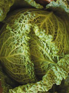 Stuffed Cabbage with Three Cheese Recipes Pickled Cabbage, Cabbage Soup, Bulgogi, Korma, Quick Kimchi, Macaroni Casserole, Mustard Pork Chops, Ricardo Recipe, Confort Food