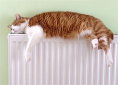 calefaccion en el hogar - Buscar con Google