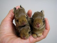 Easter Bunnies baby rabbit