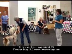 ▶ Obedience FUNdamentals (Hannah Branigan MS,CPDT-KA, KPA,-CTP) - YouTube Great DVD on my wishlist! :)