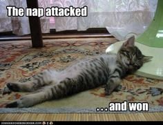 The nap attacked...and won