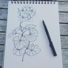 Continuous line drawing of geranium illustration