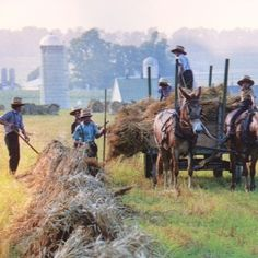 Bailing hay the Amish way.  Men and young boys work together to bail hay.  There is more than one size of bailed hay but a typical rectangular one can weigh 70 lbs.