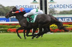 Star colt Pierro will stand for $77,000 at Coolmore Stud in the spring.