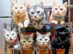 Gatos na Web - Curiosidades http://miadosnaweb.blogspot.com.br/2013/02/gatos-no-mundo.html