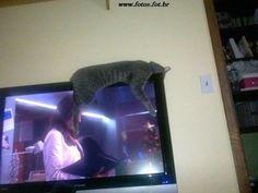 Gato folgado dormindo encima da TV - Fotos e fotos - Seu portal de imagens grátis