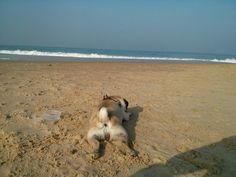 Budda on the beach