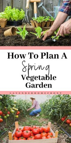 Spring is right around the corner, and, although we are currently battling through the harsh winter weather, now is the time to start planning for your spring vegetable garden! Spring Vegetable Garden, Vegetable Garden For Beginners, Starting A Vegetable Garden, Olive Garden, Backyard Vegetable Gardens, Gardening For Beginners, Spring Garden, Gardening Tips, Flower Gardening