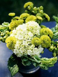 For this posy, we picked hydrangea blooms, added sprigs of Hypericum with berries, pincushion mums, and bells of Ireland.