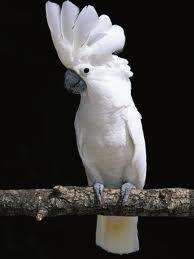 Reiki bird