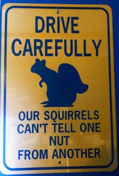 Drive carefully...our squirrels can't tell one nut from another