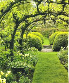 Espalier apple tree arch