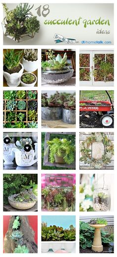 """Gardens Idea Box by DaisyMaeBelle - Melissa 18 Succulent Garden Ideas! will these grow in Blue River, CO? Only if they are Hardy in your zone. Sempervivem """"hens & chicks""""are and will do well there.These These may refer to: Gardening Zones, Succulent Gardening, Container Gardening, Gardening Tips, Organic Gardening, Succulent Planters, Hanging Planters, Growing Succulents, Cacti And Succulents"""
