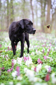 Hund_Portrait_Schmetterling_Deutsche Dogge_Ridgeback_RiDo_Fotografin Julia Neubauer