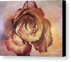 Rose In Time Canvas Print by Onedayoneimage Photography.  rose, petals, aged, dying, wrinkled, flower, pink, brown, weathered, botanical, still life, antique, textured, painterly, romantic, romance, canvas, canvas print, home decor, office decor, rose canvas, dusty rose,