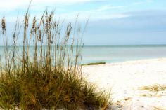 Beach Landscape of Sea Oats and a kayak