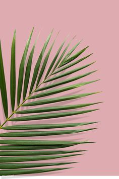 Tropical leaf with summer vibes in a pink ground premium psd Leaves Wallpaper Iphone, Palm Leaf Wallpaper, Plant Wallpaper, Summer Wallpaper, Tropical Art, Tropical Vibes, Tropical Leaves, Tropical Prints, Tropical Background