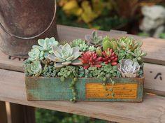 Pin on Interior ideas Cactus Planta, Cactus Y Suculentas, Succulents In Containers, Planting Succulents, Garden Deco, Mini Plants, Succulent Terrarium, Trees To Plant, Container Gardening