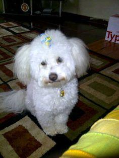 Boo Bullet, Dogs, Animals, Animales, Animaux, Pet Dogs, Doggies, Animal, Animais