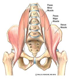 Understanding The Hip Anatomy Muscles For Yoga Yoga And Your Hips Part Ii Jason Crandell Vinyasa Yoga Method Vinyasa Yoga, Yoga Bewegungen, Yoga Meditation, Namaste Yoga, Yoga Art, Hip Anatomy, Human Body Anatomy, Human Anatomy And Physiology, Hip Muscles Anatomy