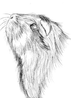 guinea pig line art