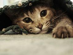 kissanpentu kuvia, kissa taustakuvia, silmät vektori, tassut taustat, tumma materiaali