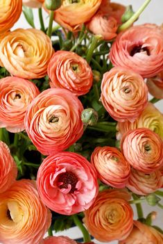 Seasonal spring coral ranunculus perfect for a spring wedding wedding garden Coral ranunculus Ranunculus Boutonniere, Ranunculus Flowers, Peonies Bouquet, Ranunculus Centerpiece, White Ranunculus, Flower Power, Flower Farm, Cactus Flower, Gardens