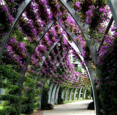 South Bank Parklands in Queensland, Australia. Bougainvillea, I think. This would be nice to provide hallway shade. Beautiful Space, Beautiful Gardens, Beautiful Flowers, Beautiful Pictures, Beautiful Life, Simply Beautiful, Landscape Architecture, Landscape Design, Garden Design