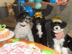 Birthday Boy Cooper, Molly & Mabel