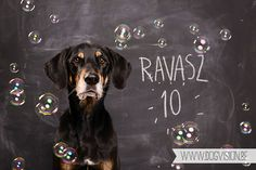 Happy Birthday Ravasz-10jaar   Erdélyi  Kopó   Transylvanian hound   www.DOGvision.be