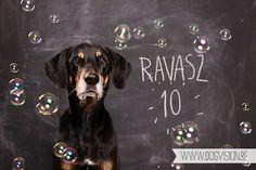 Happy Birthday Ravasz-10jaar | Erdélyi  Kopó | Transylvanian hound | www.DOGvision.be