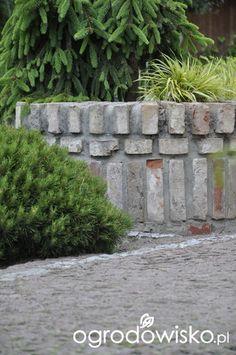 Na Łowieckiej - strona 124 - Forum ogrodnicze - Ogrodowisko