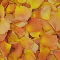 Mango Preserved Freeze Dried Rose Petals LIMITED Edition All natural, eco-friendly & biodegradable!   Flyboy Naturals Grows over 100 colors of roses for our petal production www.flyboynaturals.com #rosepetals #flyboynaturals #petals #wedding  #weddingpetals #aisle #bridetobe #ceremony #ceremonyideas #flowers #proposal #mango #proposal
