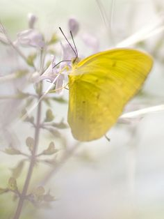 wildlife photography: 8 tips for photographing butterfiles