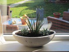 plantas deserticas, aqui en mi ventana al jardin. ideales plantas para areas con mucho sol, porque solo ellas resisten. con una maceta adecuada a nuestra decoracion es perfecta.