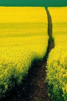 Beautiful Path In The Field