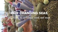 """Our Changing Seas II: An Atlantic & Caribbean coral reef story. Artist and ocean advocate Courtney Mattison hand-sculpted """"Our Changing Seas: A..."""